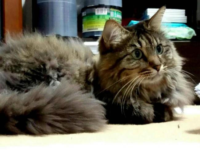 愛猫「モコ」